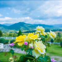 A blurred landscape of Pai's beautiful mountains and valley. A yellow bouquet of flowers is in the foreground focus. Photo I took when visiting Pai.