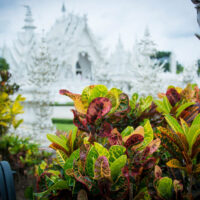 A beautiful picture of the white temple, Wat Rong Khun, in Chiang Rai Thailand. The temple is defocused in the background and the earthquake damage can be seen--one of the minarets is hanging loose.
