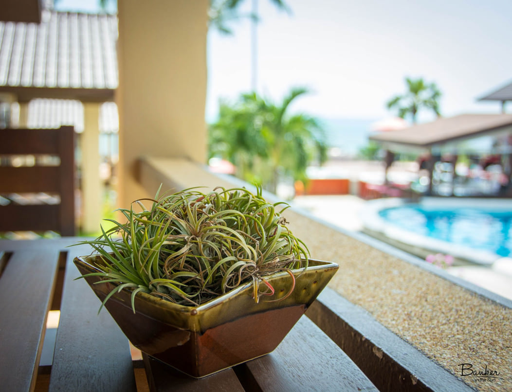 Focus on a plant in The Royal Beach Boutique Resort & Spa in Lamai Beach on Koh Samui. The hotel pool and ocean are defocused in the background.