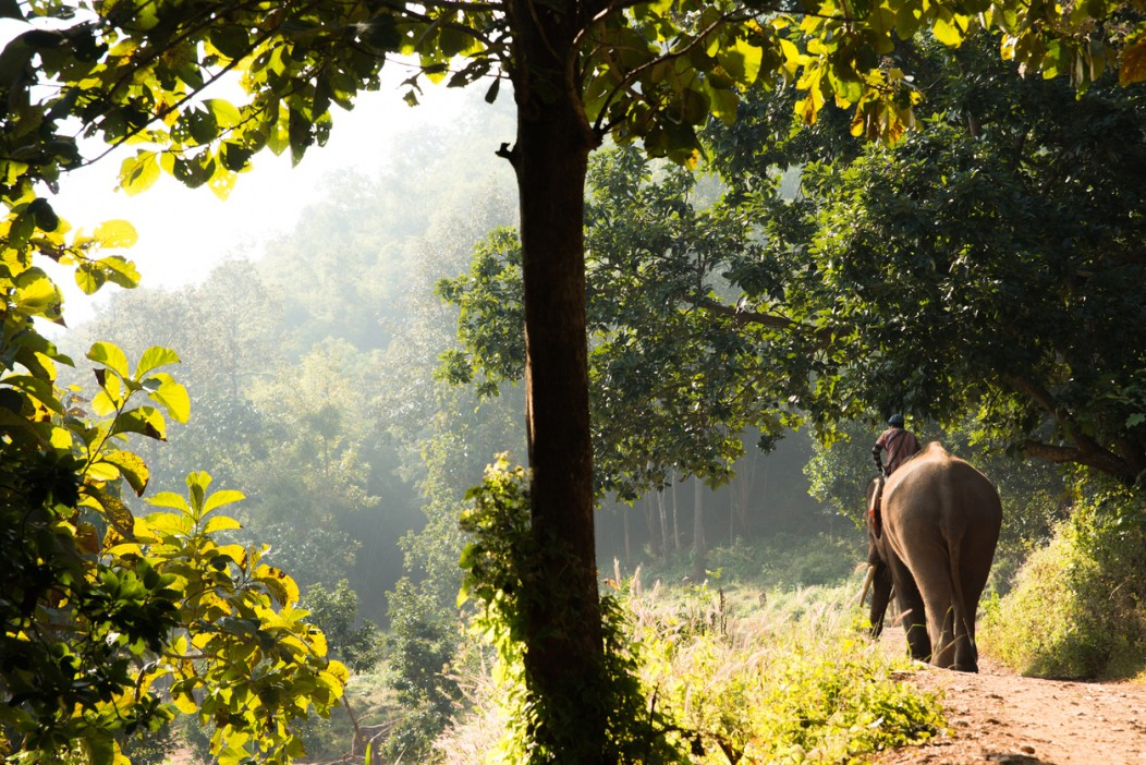 A mahout and his elephant in the jungle surrounding Chiang Mai.